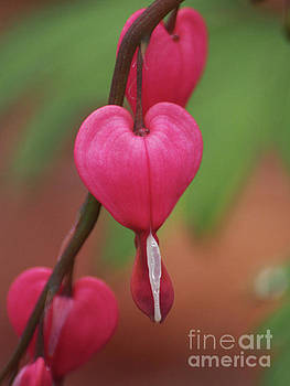 First Hearts by Dorothy Lee