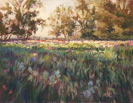 First Light in the Iris gardens by Tamara Keiper