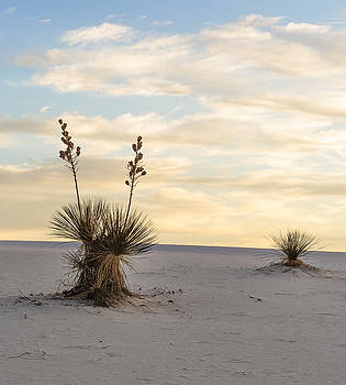 First Light With Yucca by Focus On Nature Photography