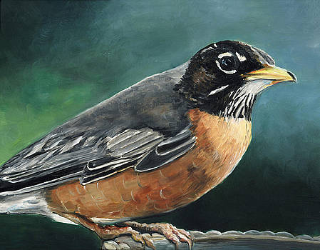 First Robin by Charlotte Yealey