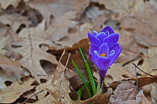 First Sign of Spring by Ashleigh Mowers