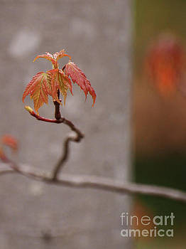 First Signs Of Springtime 3 by Dorothy Lee