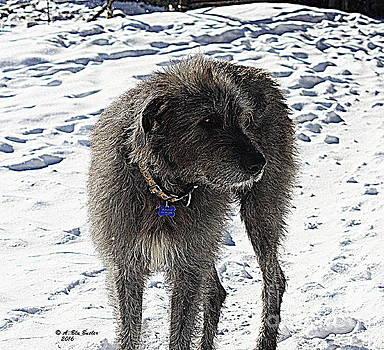 First Snow by Ann Butler