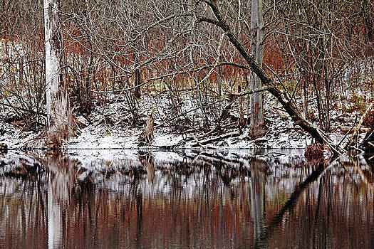 Debbie Oppermann - First Snow At The Pond