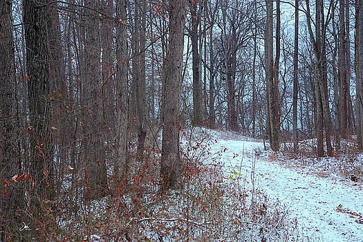 First Snow, East Boundary Road by Ron Jones