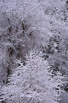 First Snow I by Ron Cline