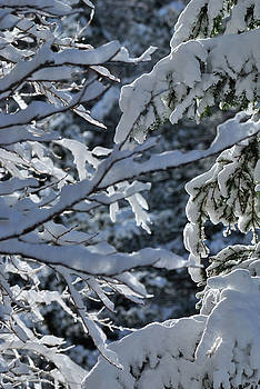 First Snow II by Ron Cline