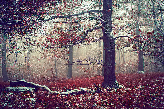 Jenny Rainbow - First Snow in Fall Woods
