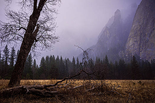 Priya Ghose - First Snow In Yosemite Valley
