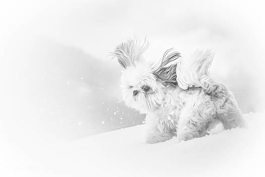 First Snow by Joy McAdams