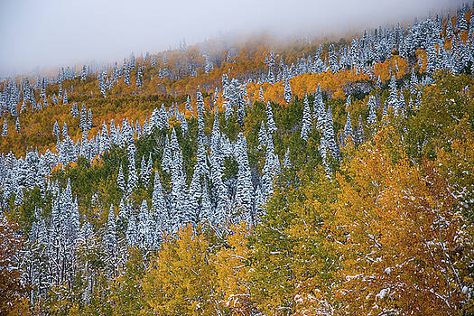 First Snow On Grand Mesa by Roy Kastning