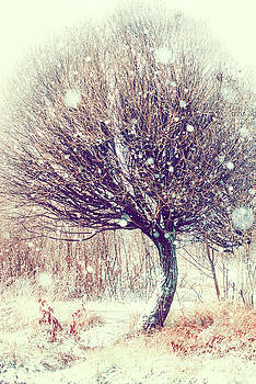 First Snowflakes by Jenny Rainbow