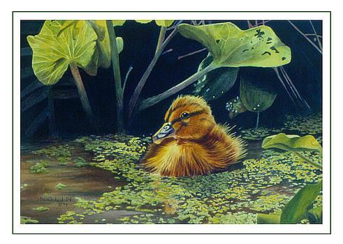 Bob Nolin - First Spring - Mallard Duckling