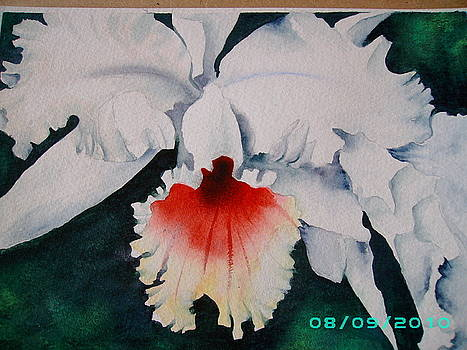 First Watercolour Orchid by Dion Halliday
