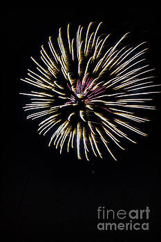 Firworks 1376V by Doug Berry