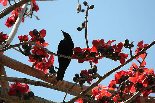 Fish Crow in the Kapok Tree by Theresa Willingham