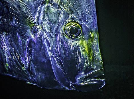 Fish Face by Gary Shepard