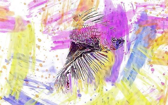 Fish Fighting Fish Aquatic Animal  by PixBreak Art