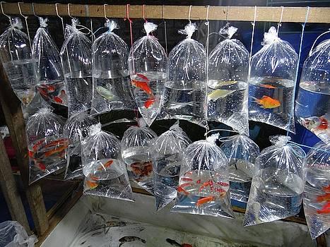 Fish in a bag by Exploramum Exploramum
