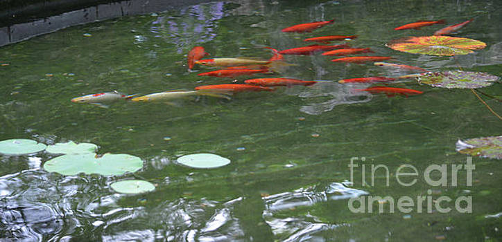 Fish In The Pond by Ruth Housley