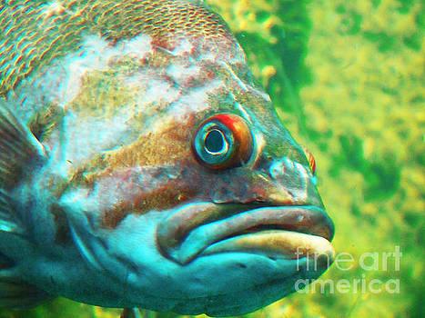 Fish Looking at You by David Frederick