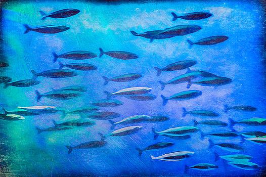 Priya Ghose - Fish School