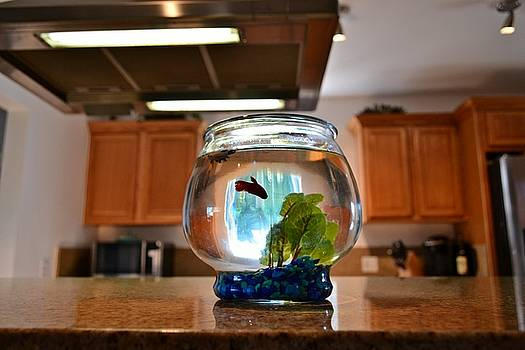 Tommi Trudeau - Fishbowl