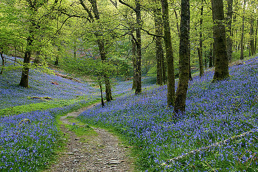 Fishgarth woods by Susan Tinsley