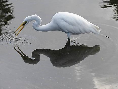 Fishing Egret by Ron Enderland