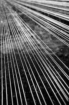 Gaspar Avila - Fishing lines