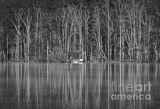 Fishing Norris Lake by Douglas Stucky