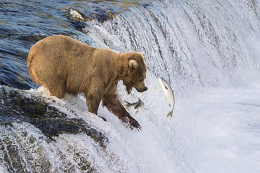 Fishing on the Edge by Renee Doyle