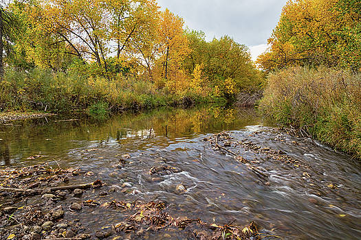 Fishing Stream View by James BO Insogna