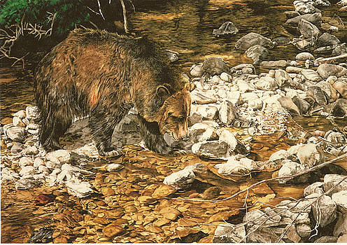 Fishn' the Shallows by Judith Angell Meyer