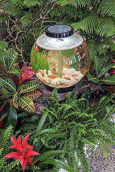 Fishy Paradise by Jayne Gohr