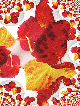 Five Autumn Leaves by Martin Howard