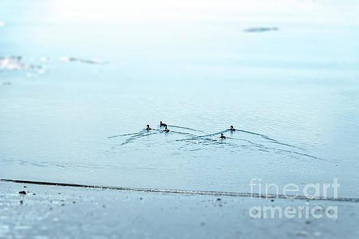 Five Little Ducks by Elizabeth Dow