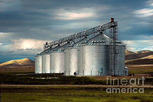 Five Silos on the Plains of the Texas Panhandle by MaryJane Armstrong