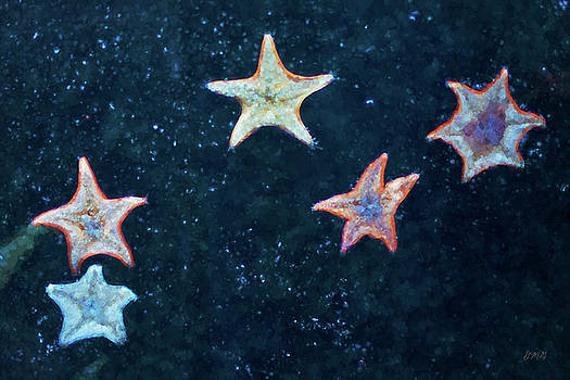 David Gordon - Five Starfish