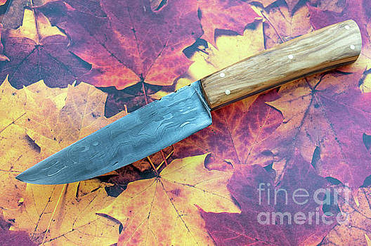 Fixed blade by Diane Friend