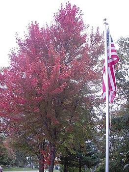 Flag and tree by Deborah Finley