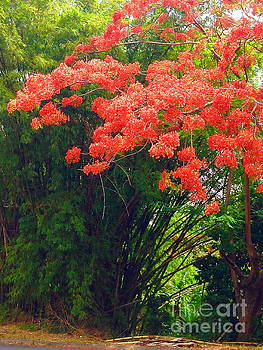 Flamboyant With Bamboo by The Art of Alice Terrill