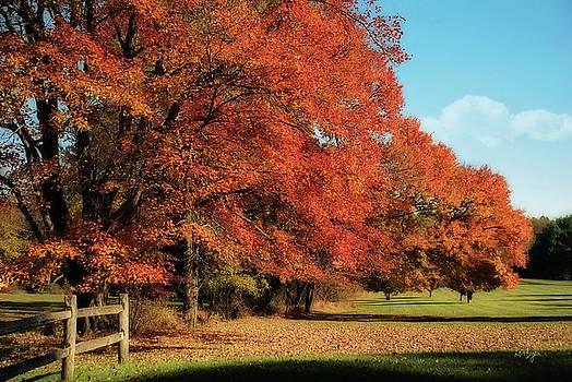 Lois Bryan - Flame Trees