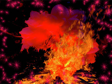 Flaming Blooms by Amanda Romer