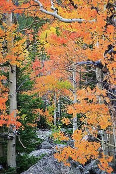 Flaming Forest by David Chandler