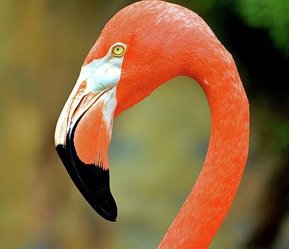 Flamingo - 1180a by Debra Kewley