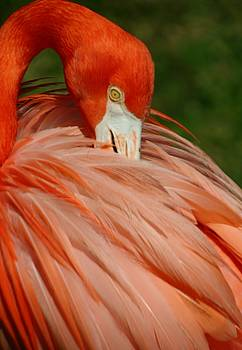 Flamingo at the Park 2 by Sheryl Unwin