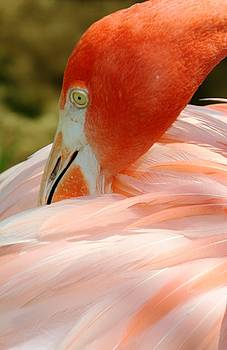 Flamingo at the Park 3 by Sheryl Unwin