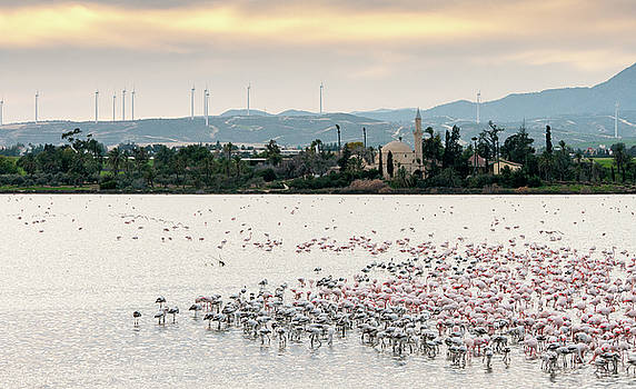 Flamingo birds in the lake by Michalakis Ppalis