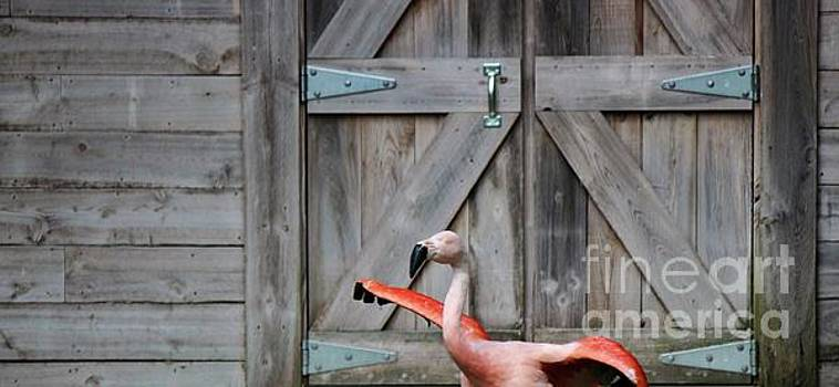 Paulette Thomas - Flamingo by the Barn Door